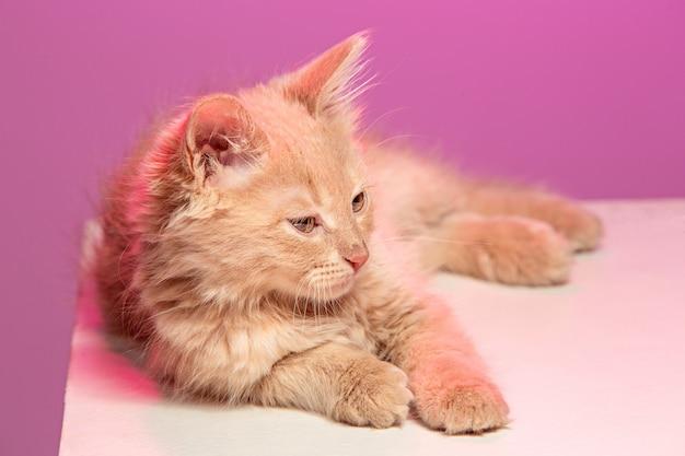 Kot Na Różowej Przestrzeni Darmowe Zdjęcia