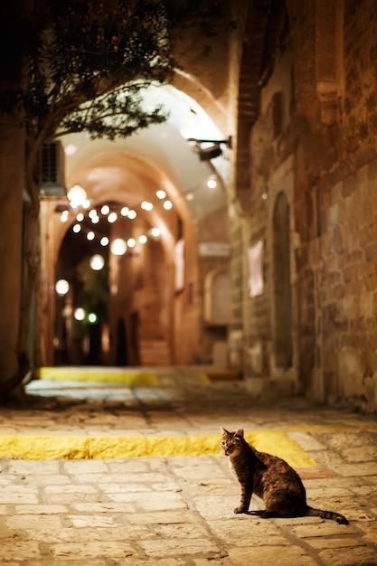 Kot Siedzi Na Drodze. Stare Miasto Jaffa Street Wieczorem. Premium Zdjęcia