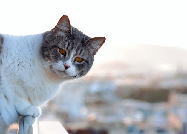 Kot siedzi na skraju tarasu, patrząc na krajobraz Premium Zdjęcia