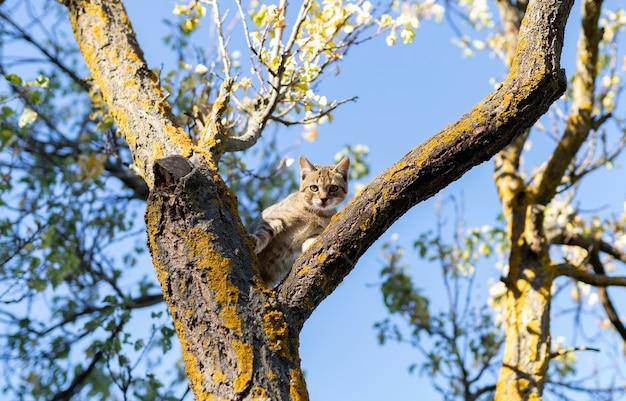 Kot Szczeniak Na Drzewie Premium Zdjęcia