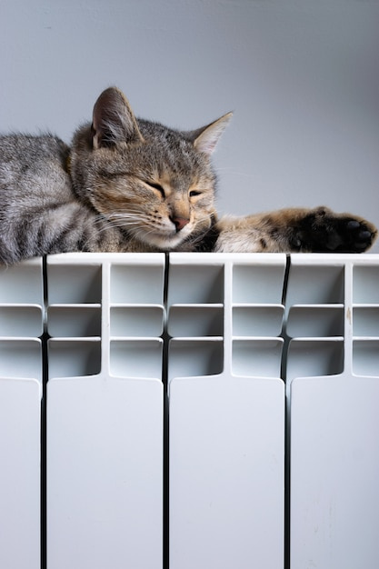 Kot Tygrys Relaksujący Się Na Ciepłym Grzejniku Premium Zdjęcia