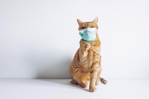 Kot W Masce Medycznej Premium Zdjęcia