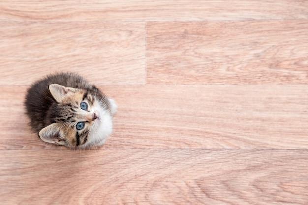 Kotek Czeka Na Jedzenie. Mały Kot W Paski Siedzi Na Drewnianej Podłodze, Lizanie I Patrząc Na Kamery Premium Zdjęcia