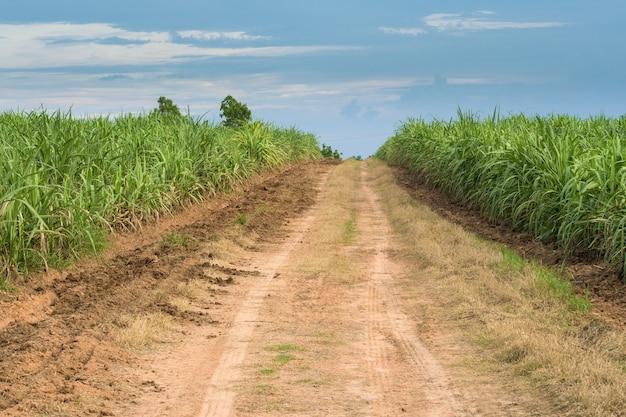 Krajobraz Drogi Trzciny Cukrowej Premium Zdjęcia