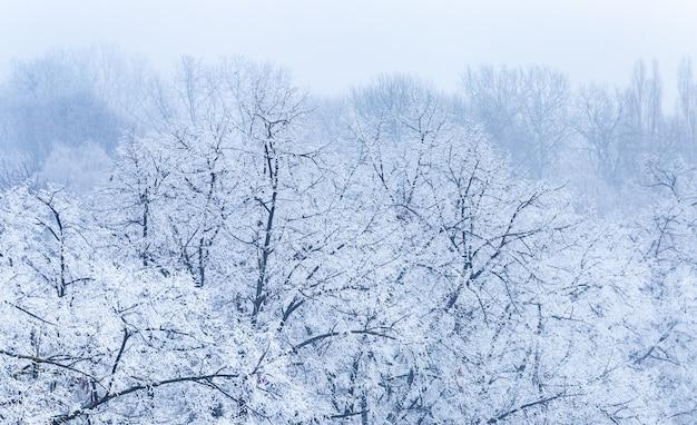 Krajobraz Gałęzi Drzew Pokrytych Szronem Zimą W Zagrzebiu W Chorwacji Darmowe Zdjęcia
