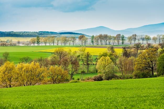 Krajobraz Pola Z Rzepakiem Darmowe Zdjęcia