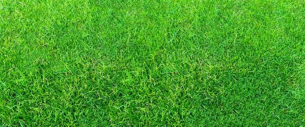 Krajobraz trawy pole w zielonym jawnym parku używa jako naturalny tło. zielona trawa tekstury z pola. Premium Zdjęcia