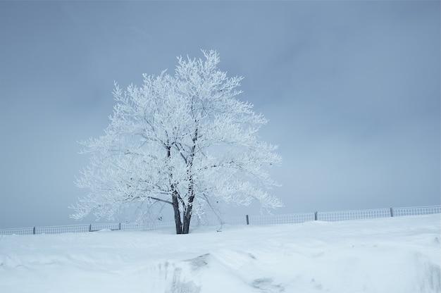 Krajobraz Zimowy Darmowe Zdjęcia