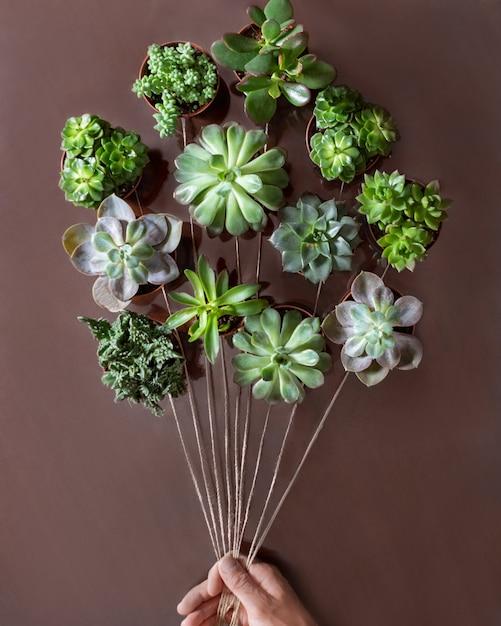 Kreatywne Soczyste Rośliny Z Góry Jak Balon Premium Zdjęcia