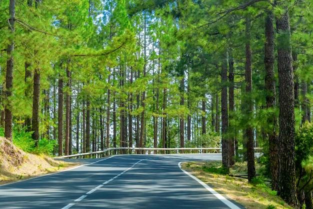 Kręta Droga W Górskim Lesie Darmowe Zdjęcia