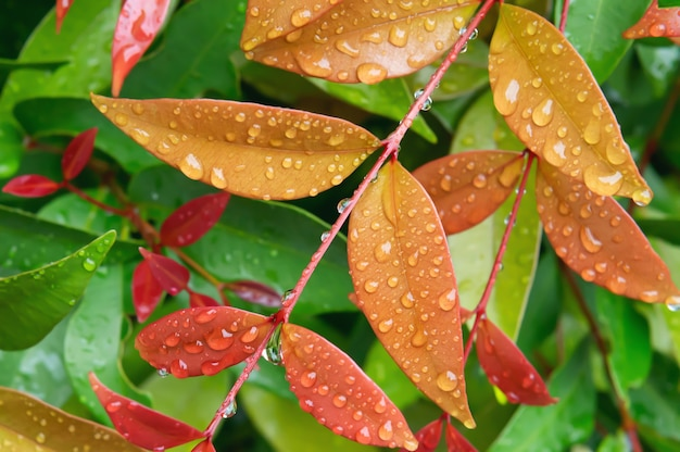 Kropla Deszczu Na Liściu W Tle Przyrody Premium Zdjęcia