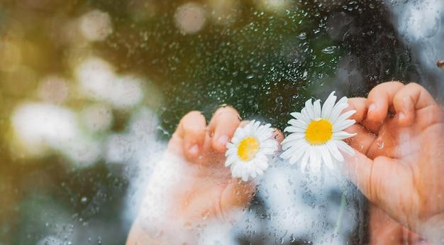 Krople Deszczu Na Szybie Wiejskiego Okna, Oczy Z Kwiatów Rumianku W Dłoniach Dzieci Patrzą Na Deszcz. Darmowe Zdjęcia