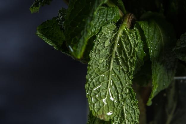 Krople wody na liściach zielonych roślin przez cały rok Premium Zdjęcia