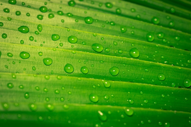 Krople Wody Na Zielonych Liściach Premium Zdjęcia