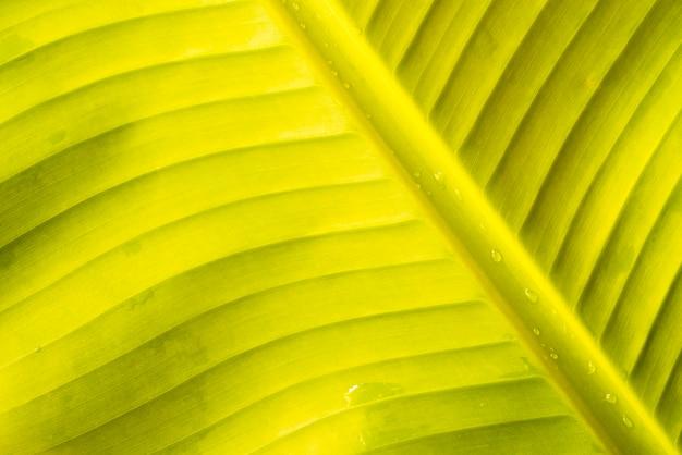 Krople wody na zielonym liściu bananowca Darmowe Zdjęcia