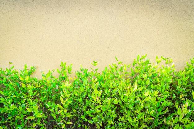 Krzewowica Czołganie Roślina Bluszcz Beton Darmowe Zdjęcia