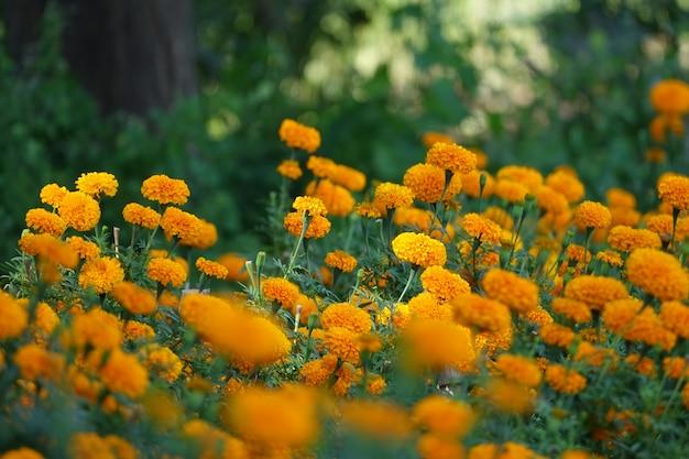 Krzewy Z żółtymi Kwiatami Darmowe Zdjęcia