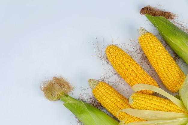 Kukurudza W Strąku Odizolowywającym Od Kukurydzanego Pola Na Biel ścianie. Darmowe Zdjęcia