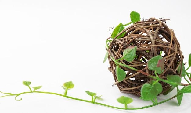 Kula Rotanu Splatana Winorośli Zielonych Roślin Na Białym Tle Premium Zdjęcia
