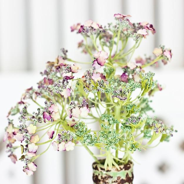 Kwiat Arcydzięgielowi Officinalis W Wazie. Biali Mali Kwiaty Na Zielonej Aureoli. Premium Zdjęcia