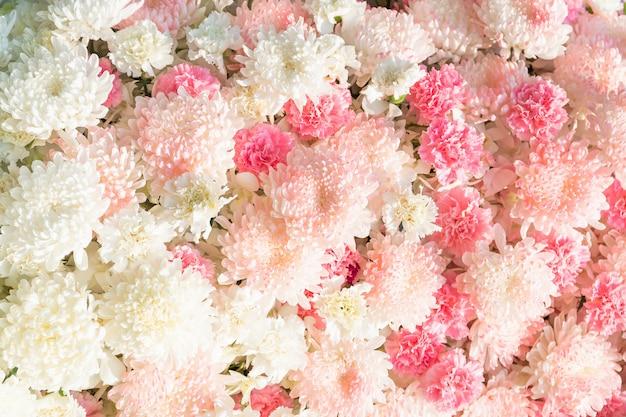 Kwiat goździka i kwiat chryzantemy Premium Zdjęcia