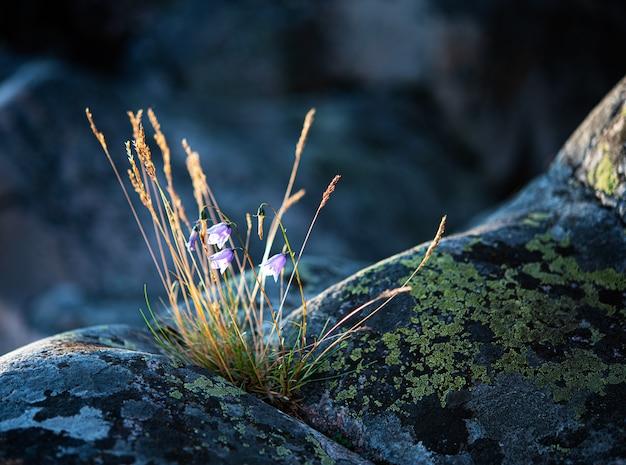 Kwiat I Ziele Na Szarej Kamiennej Górze Premium Zdjęcia