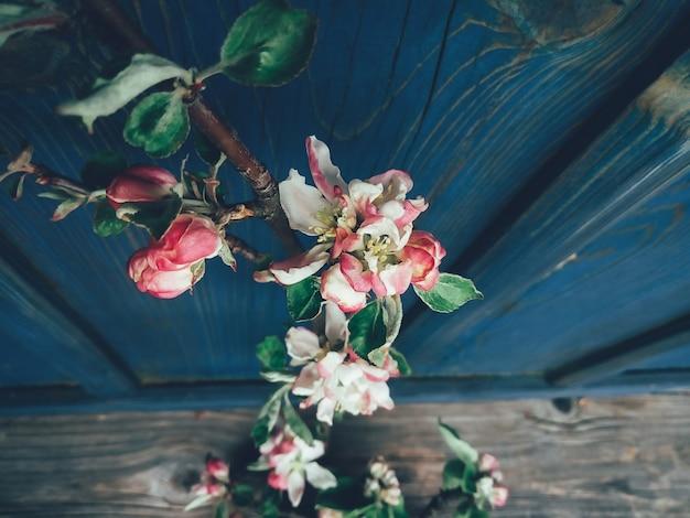Kwiat jabłoni oddział niebieski Premium Zdjęcia