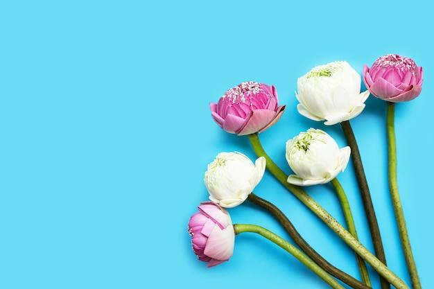Kwiat Lotosu. Widok Z Góry Premium Zdjęcia