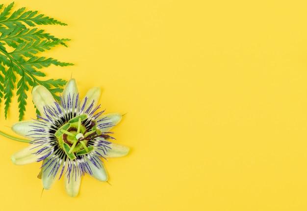 Kwiat Męczennicy Z Liściem Paproci Na żółtym Stole Premium Zdjęcia