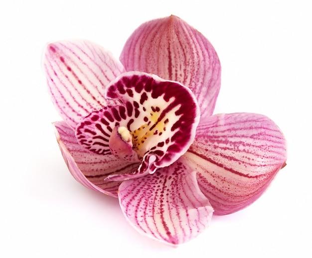 Kwiat Orchidei Na Białym Tle Zbliżenie Premium Zdjęcia