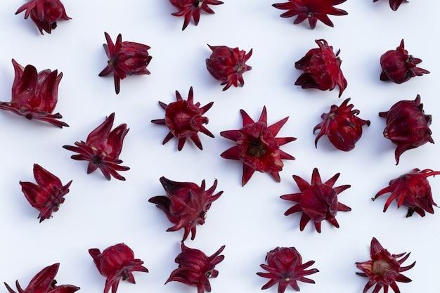 Kwiat Roselle Na Białym Tle. Premium Zdjęcia