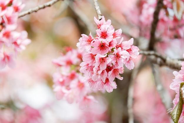 Kwiat Różowy Wesoły Kwiat Premium Zdjęcia
