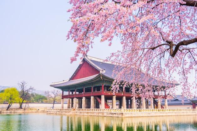 Kwiat wiśni w pałacu gyeongbokgung. seul, korea południowa. Premium Zdjęcia