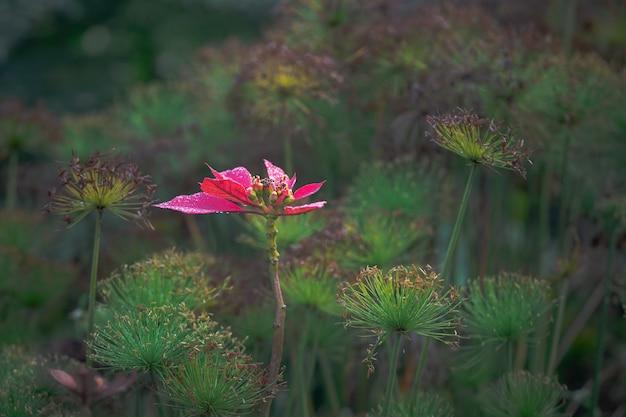 Kwiat Z Czerwonymi Liśćmi W Ogrodzie Pod Słońcem Z Zielenią Darmowe Zdjęcia