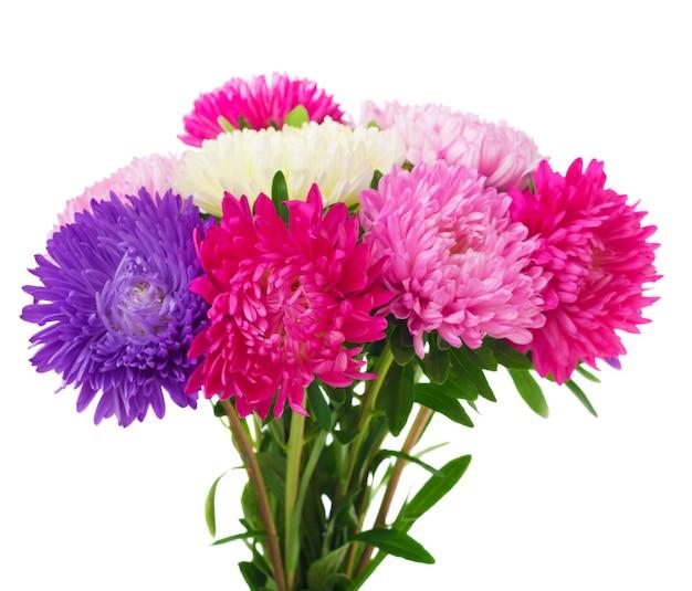 Kwiaty Aster Premium Zdjęcia