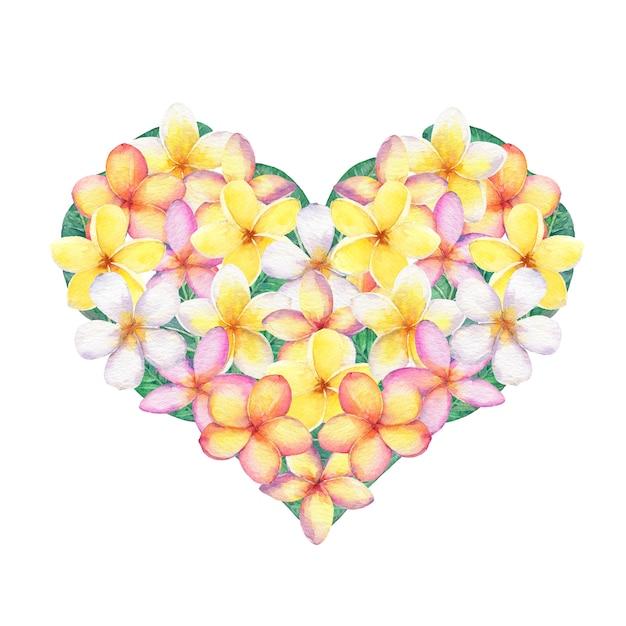 Kwiaty Frangipani W Kształcie Serca Premium Zdjęcia