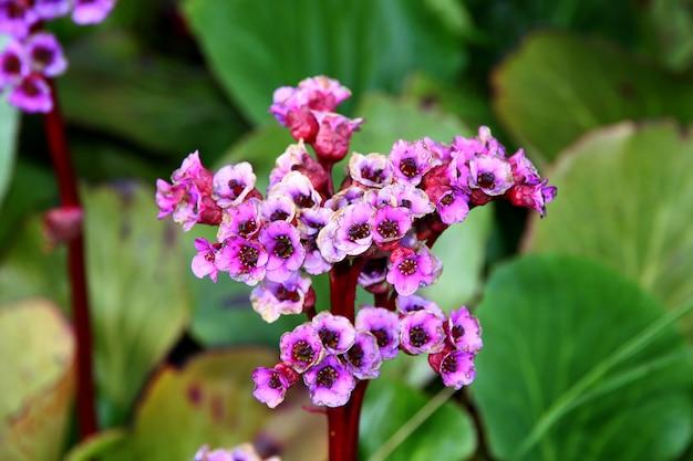 Kwiaty Na Polu W Norwegii, Skandynawii Premium Zdjęcia