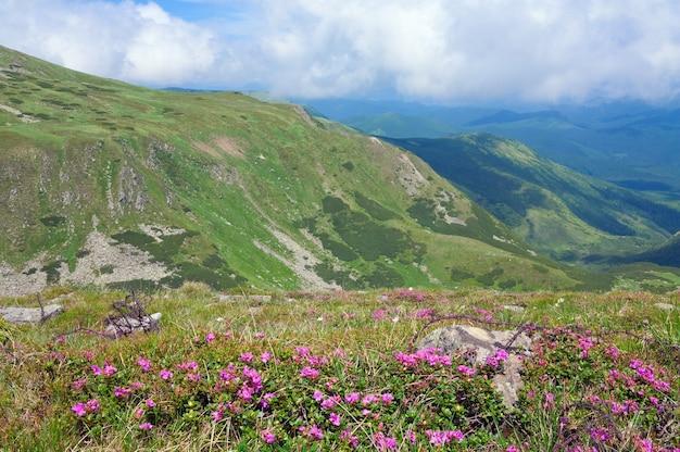 Kwiaty Rododendronów I Drut Kolczasty W Miejscu Operacji I Wojny światowej Na Letnim Zboczu Góry (ukraina, Karpaty) Premium Zdjęcia