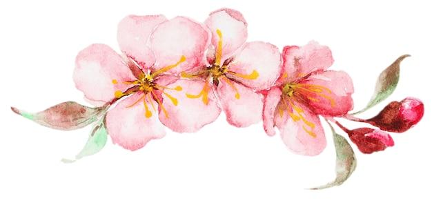 Kwiaty w akwarela sakura Premium Zdjęcia