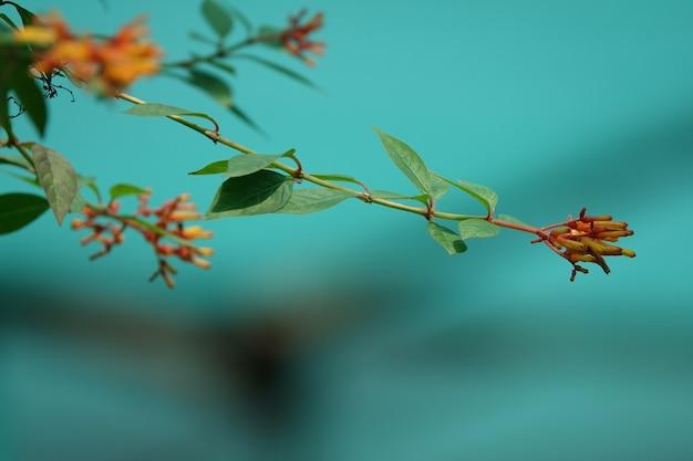 Kwiaty Zamknięte Na Gałęzi Drzewa Darmowe Zdjęcia