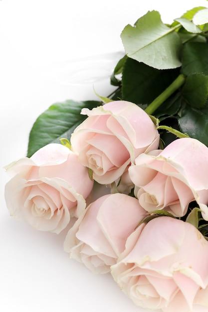 Kwiaty Darmowe Zdjęcia