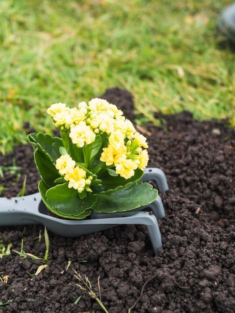 Kwitnąca Roślina Na Ogrodnictwa Rozwidleniu Nad Ziemią Darmowe Zdjęcia