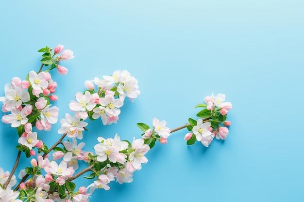 Kwitnąca Wiosna Sakura Na Błękicie Premium Zdjęcia