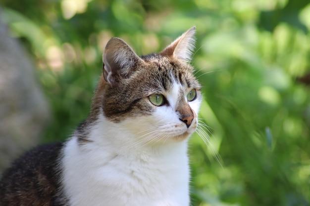 Ładny Kot Siedzi W Ogrodzie Darmowe Zdjęcia