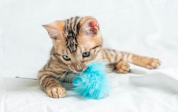 Ładny Mały Kotek Bengalski W Paski Siedzi I Bawi Się Niebieską Zabawką Darmowe Zdjęcia