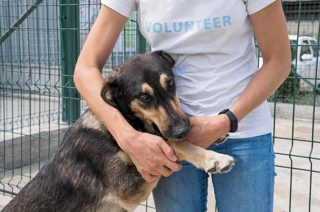 Ładny Pies Do Adopcji, Grając Z Kobietą Darmowe Zdjęcia