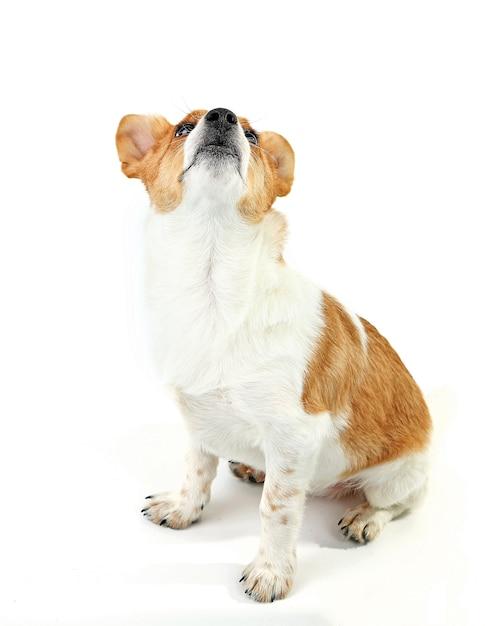 Ładny Pies Na Białym Tle Premium Zdjęcia