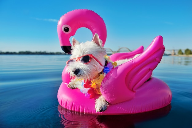 Ładny Pies Relaksuje Przy Tropikalnym Kurortem Premium Zdjęcia