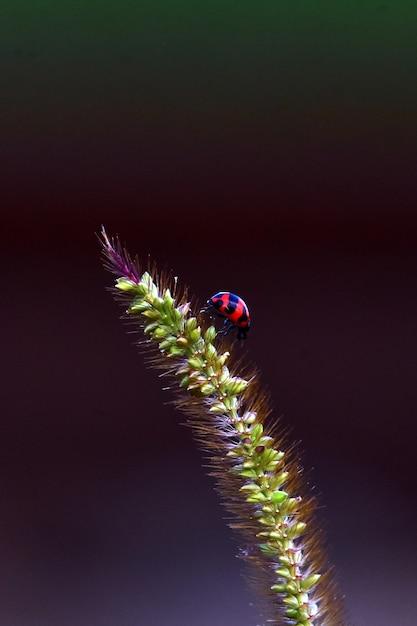 Ladybird Ulowy Na Drzewie Plaży Premium Zdjęcia