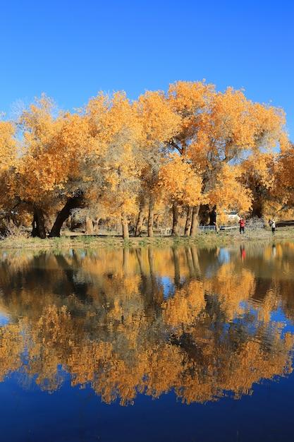 Lakeside Krajobraz Widok Darmowe Zdjęcia